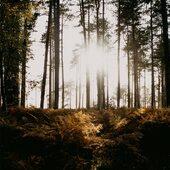 Comme une envie d'été...  Mood... 📸 @anniespratt   _______________ #lalumiereauboutdutunnel #dimancheenfamille #weekend #dimanche #sunday #weekendvibes #photography #sundaymood☀️ #moderesponsable #rayoflight #modecirculaire#moderesponsable #pause #modedurable #nature #naturephotography #forêt